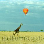 """GIRAFFE AND BALLOON"" Masai Mara Kenya"