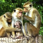 """ALL IN THE FAMILY"" Sri Lanka"