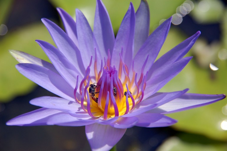 A bee pollenating a flower
